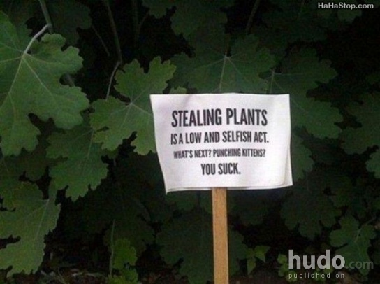 Who would actually steal plants?