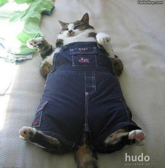 This is a cat in overalls