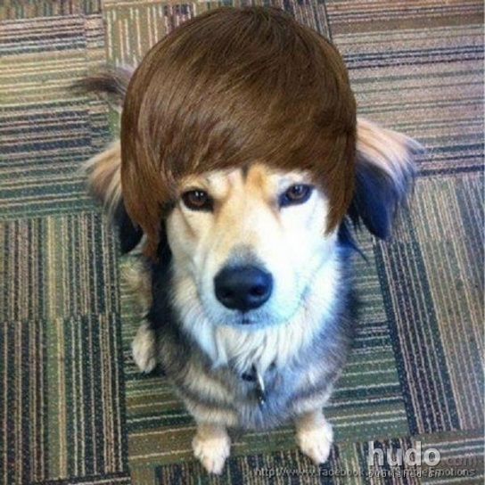 Doggie Bieber the new superstar