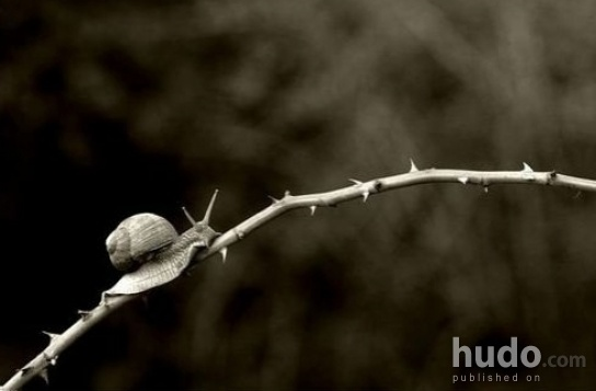 The path to success is full of thorns