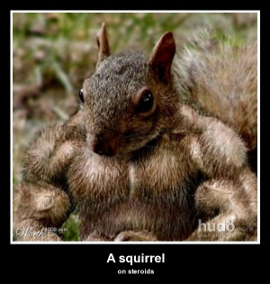 Strong Squirrel Animals Posters Hudo Com
