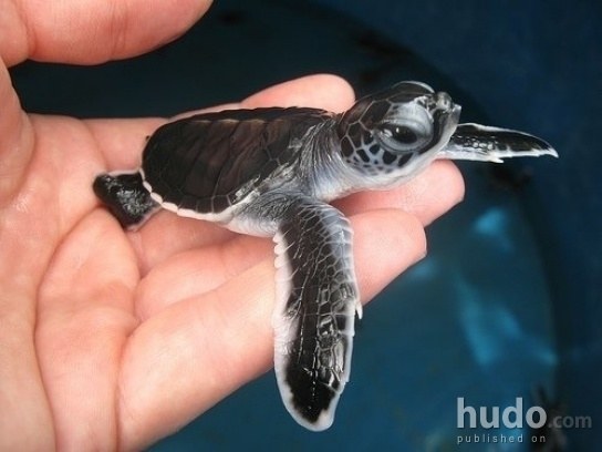 What a lovely baby turtle :)