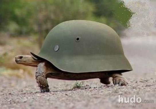 Turtles in army