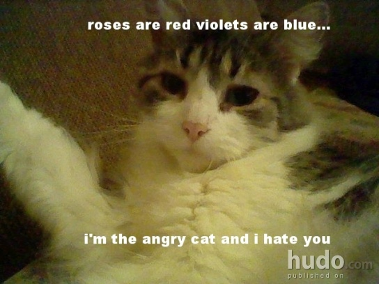 roses are red violets are blue i'm the angry cat and i ...
