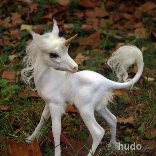 Ever seen a unicorn baby before?