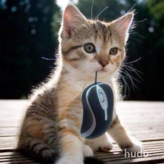 'Mom this mouse is a bit strange...'