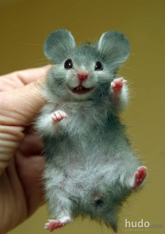Is this the cutest mouse in the world?