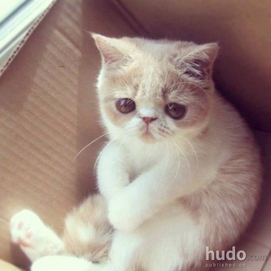 Please, just don't take my box