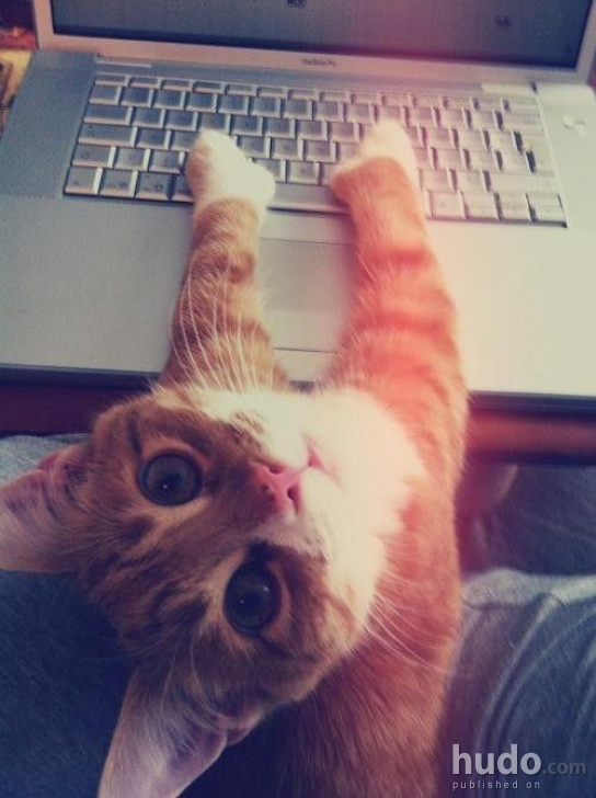 Hey kitty, wassup? Nothing, just checking my emails and stuff ...