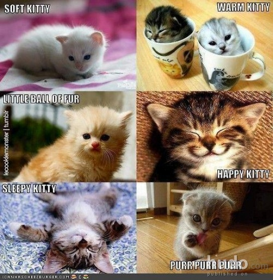 6 different types of cats which is your favourite?