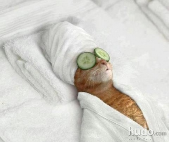 My cat went to the spa today